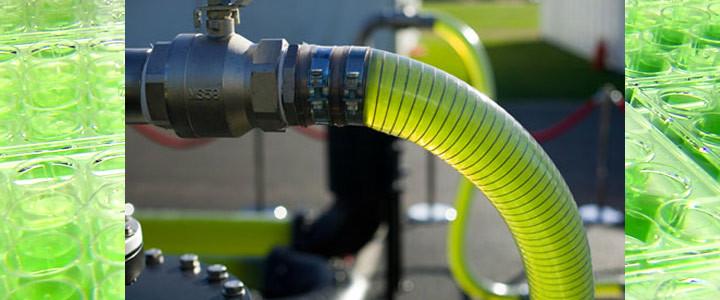 Algae Based Biofuel